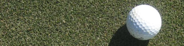 Champion Bermudagrass